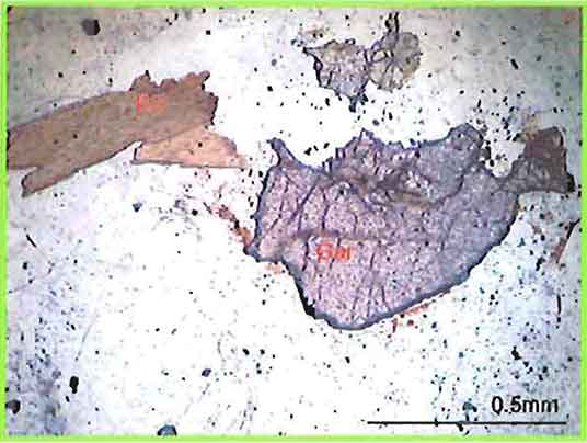 Anhedral Garnet Grain and Biotite Flakes In Augite-Biotite Granite photomicrograph image