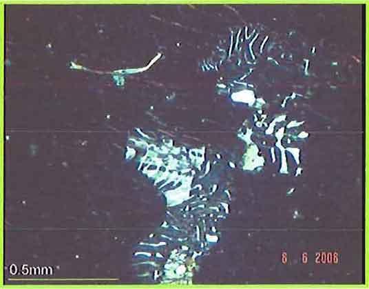 Myrmekitic Intergrowth Of Quartz And Plagioclase Feldspar photomicrogaph image