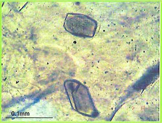 Euhedral Biotite Crystal photomicrogaph image