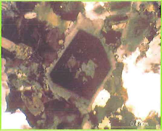 Euhedral Alkali-Feldspar Shows Zoning With Some Biotite photomicrogaph image