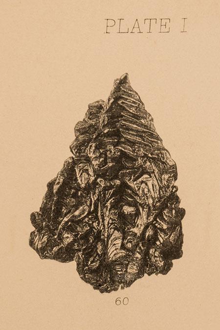 Christmas Tree illustration image