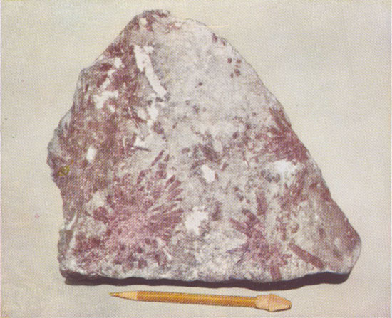 Lepidolite Specimen photo image